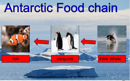 Taunese antarctic food chain for Antarctic cuisine