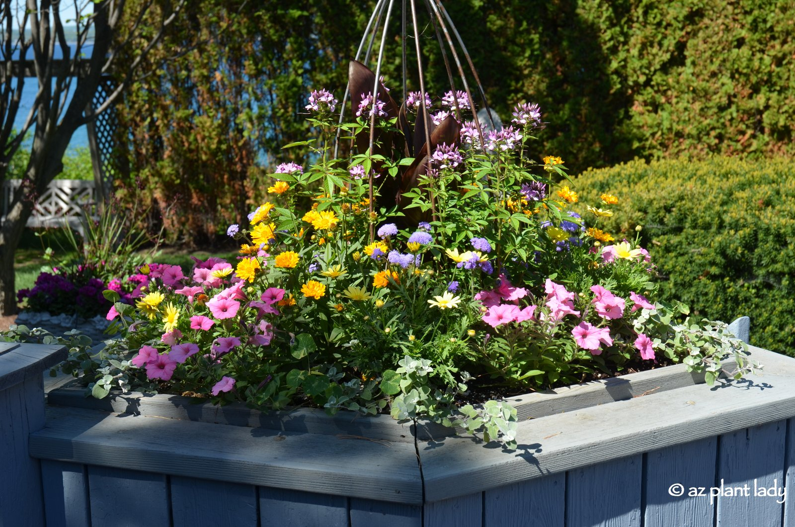 Create a Mini Hummingbird Garden in a Container Ramblings from a