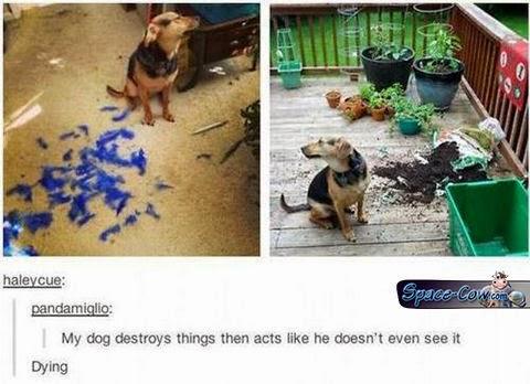 funny dog humor pics