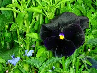 Flores Negras, parte 3