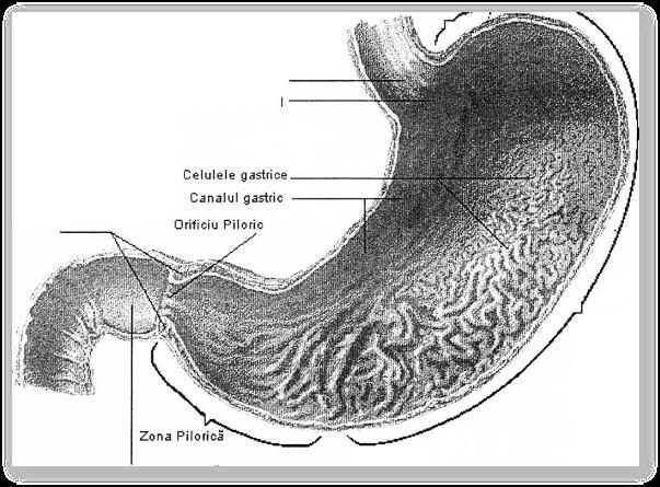 Spasmul piloric - manifestari clinice, tratament