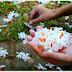वसंत पंचमी और हरसिंगार के फूलों का केसरिया रंग