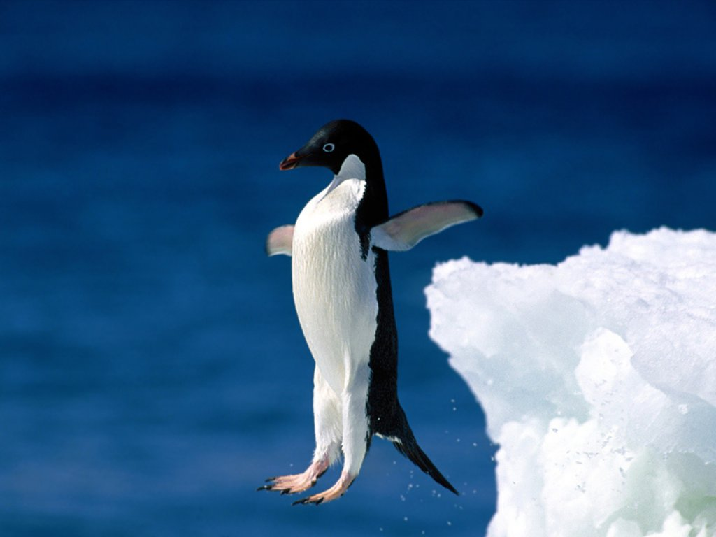 http://1.bp.blogspot.com/-3h4wLivtoHw/TttUBBIJq-I/AAAAAAAAAG4/nutH9hAOrII/s1600/Pingouin-Wallpaper.jpg
