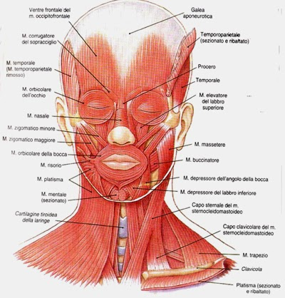 Maschere antiedematose sulla persona