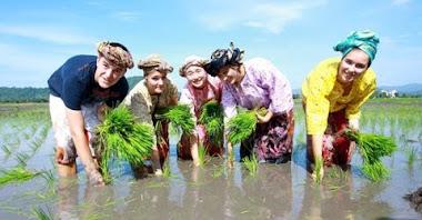 Petani Melayu