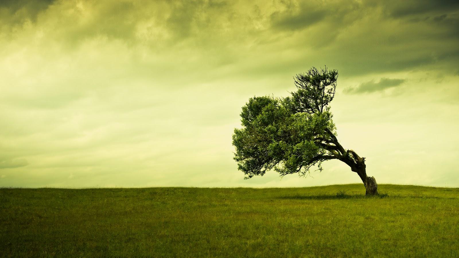 http://1.bp.blogspot.com/-3i47her62Cg/T_jmp5e9NOI/AAAAAAAAAKc/q1Y9mVLkMt0/s1600/green-grass-tree-beautiful-nature-pictures-wallpapers-for-laptop-desktop-widescreen.jpg