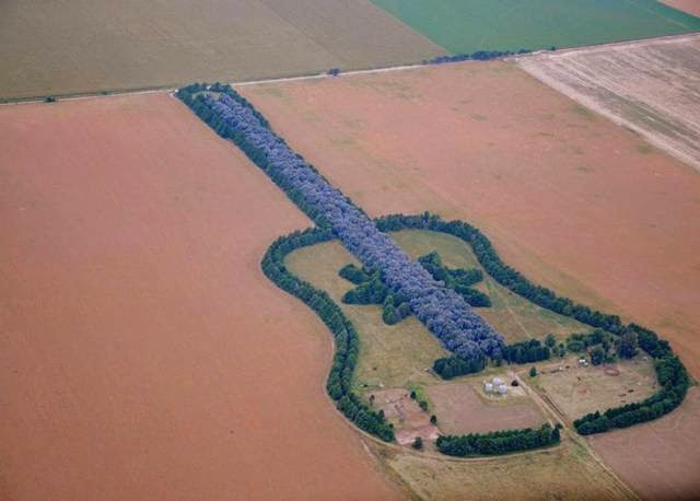 Guitar-Shaped Forest In Argentina By Pedro Martin Ureta