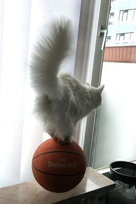 smiješne slike mačke lopta
