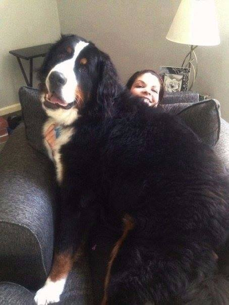 10 Dogs Who Don't Realize That They Are Huge-9 of 10