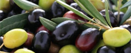 Garganistan Gargano Ulivo olive
