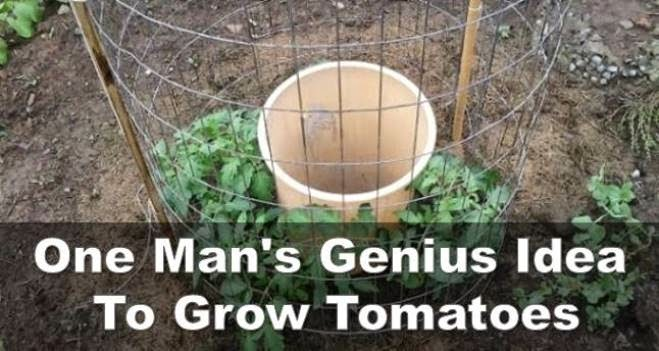 A Genius Way To Grow Your Own Organic Juicy And Tasty