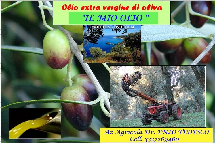 """OLIO EXTRA VERGINE DI OLIVA """" IL MIO OLIO """" poco ma veramente buono per contatti cell. 3337269460"""