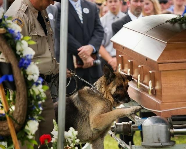Μακάρι η αφοσίωση κάποιων ανθρώπων να συγκρίνονταν με αυτή των σκυλιών