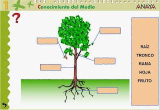 http://www.ceiploreto.es/sugerencias/A_1/Recursosdidacticos/PRIMERO/datos/03_cmedio/03_Recursos/actividades/3LasPlantas/act1.htm