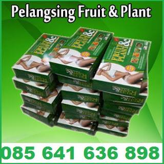 OBAT PELANGSING BADAN HERBAL – PELANGSING FRUIT PLANT 10-15 KG PERBULAN
