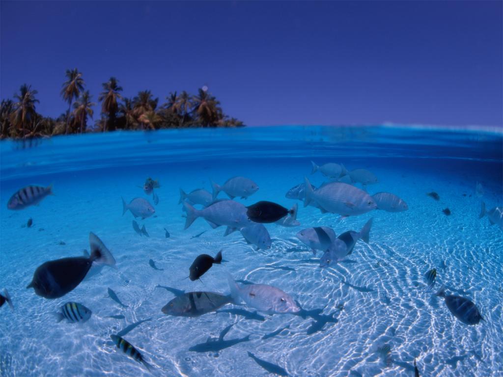 http://1.bp.blogspot.com/-3k8PyTqOUjg/TbraUBDwY7I/AAAAAAAAAdI/oH4zhtLxkfY/s1600/blue-beach-wallpapers_3853_1024.jpg