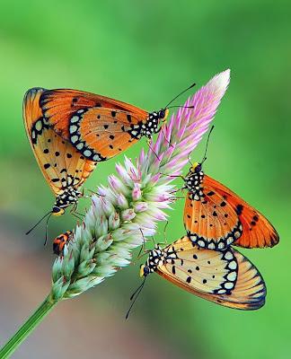 Mariposas Primavera Frases