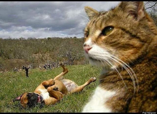 Gambar Hewan Lucu kucing dengan anjing
