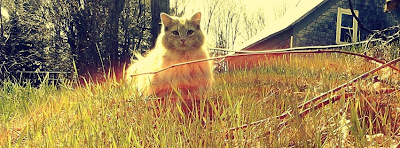 Facebook Cover Of Kitty In Garden.