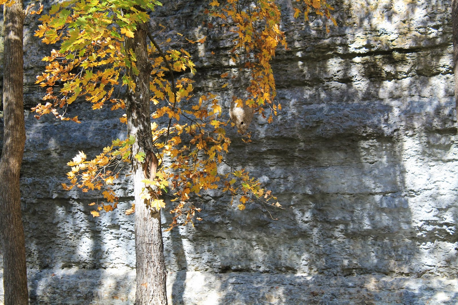 Confessions of an rver dogwood canyon for Dogwood canyon