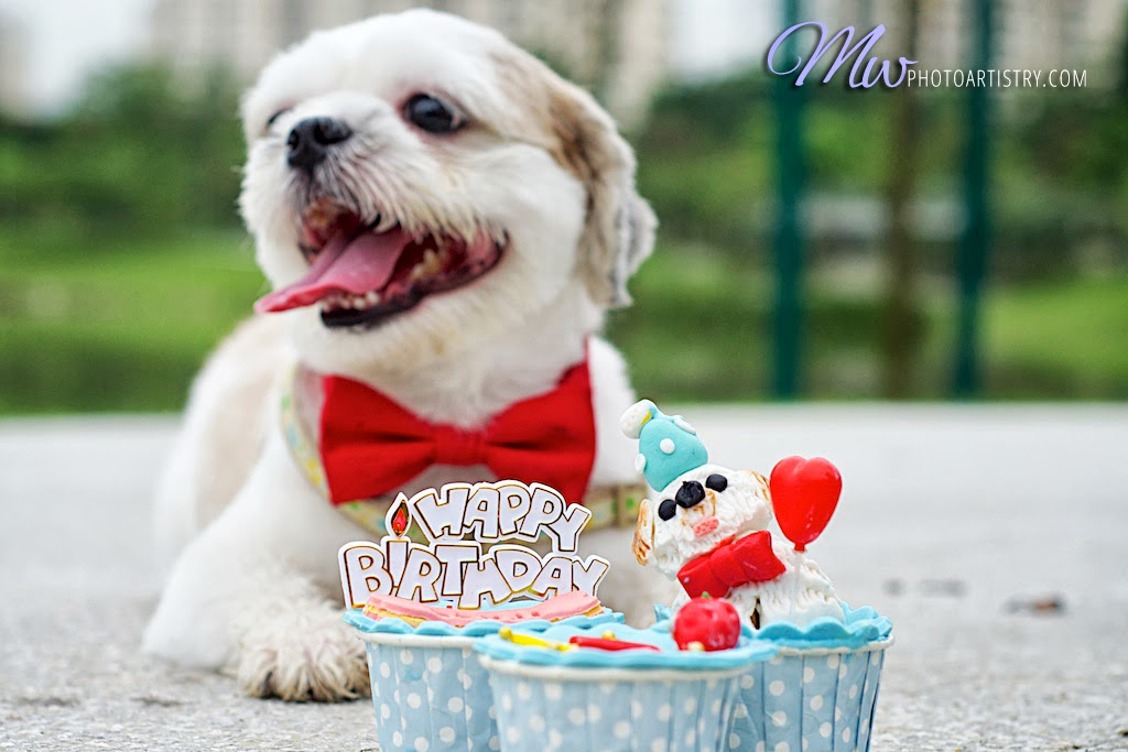 dog pet photography pupcakes