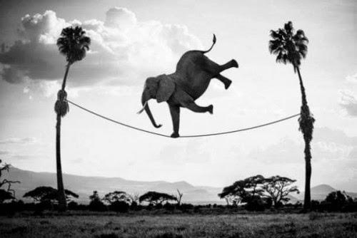 Imagen de un elefante en la cuerda floja