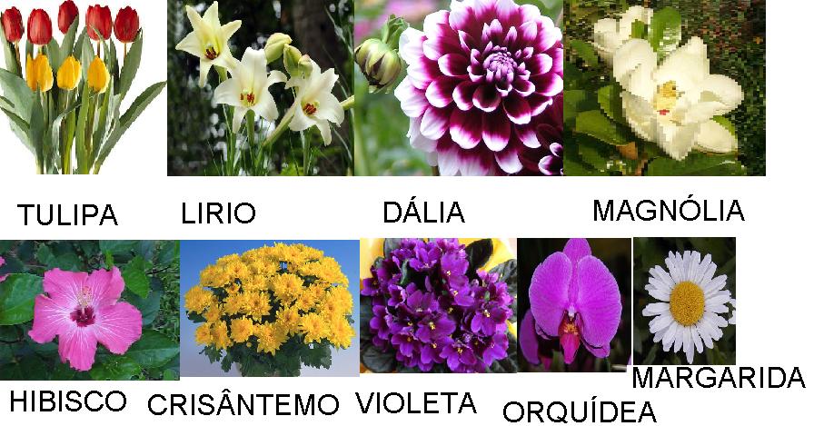 flores jardim primavera:Postado por EMEF T. V. B. às 07:34 4 comentários: