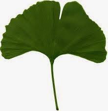 4 Tanaman Herba Pencegah Penyakit Stroke
