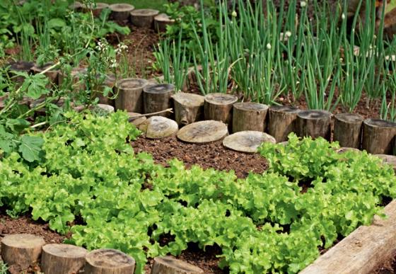 horta e jardim juntos:No Blog Horta das Corujas, estão publicados os principais objetivos