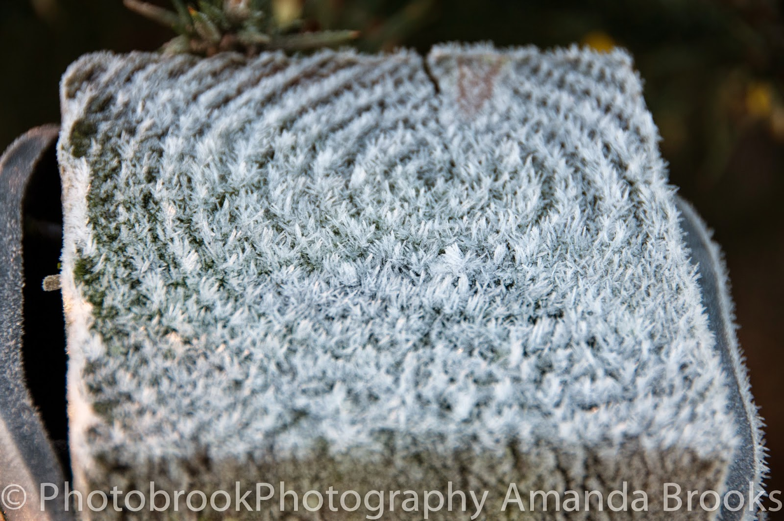 beautiful patterns made in a heavy frost in Cornwall