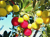 Yumberry Fruit Pictures