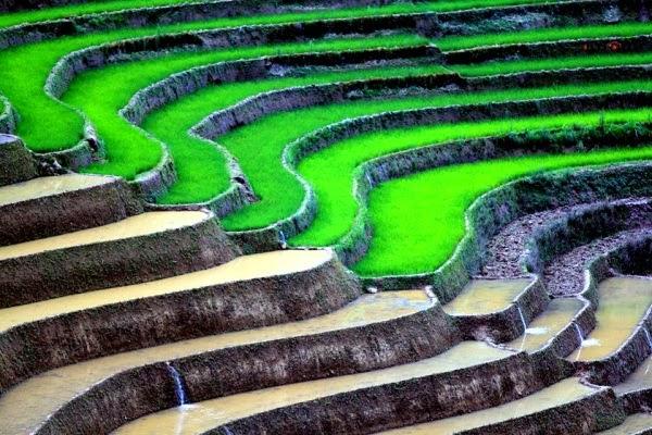 Sapa rice terrace 3