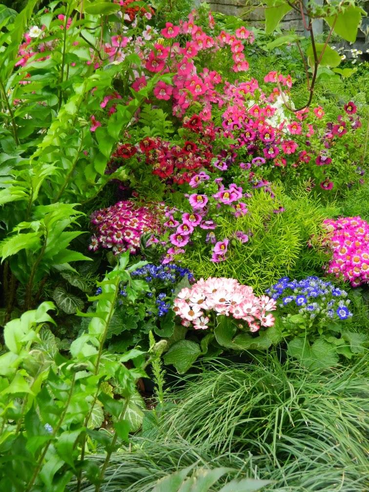 Allan Gardens Conservatory Spring Flower Show 2014 garden muses-not another Toronto gardening blog