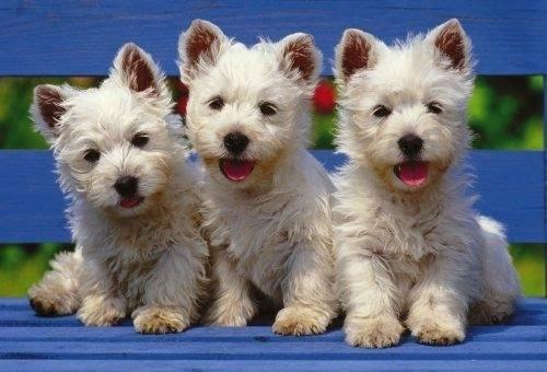 8 Cosas fijarse elegir perro