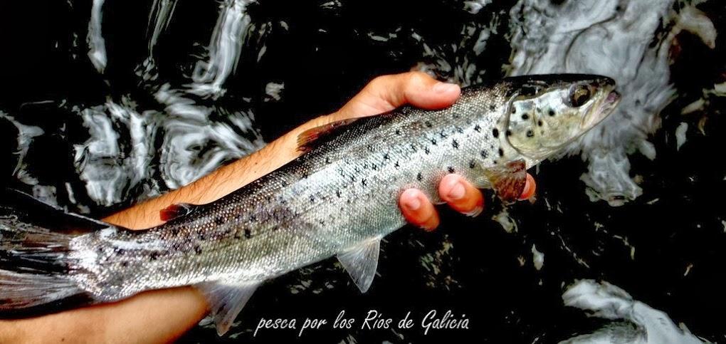 Pesca por los Ríos de Galicia