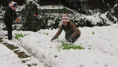 Snow in Vietnam 2013 Photos