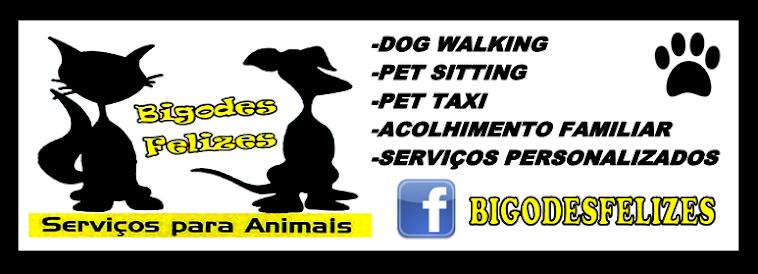 BIGODES FELIZES PET SITTING DOG WALKING