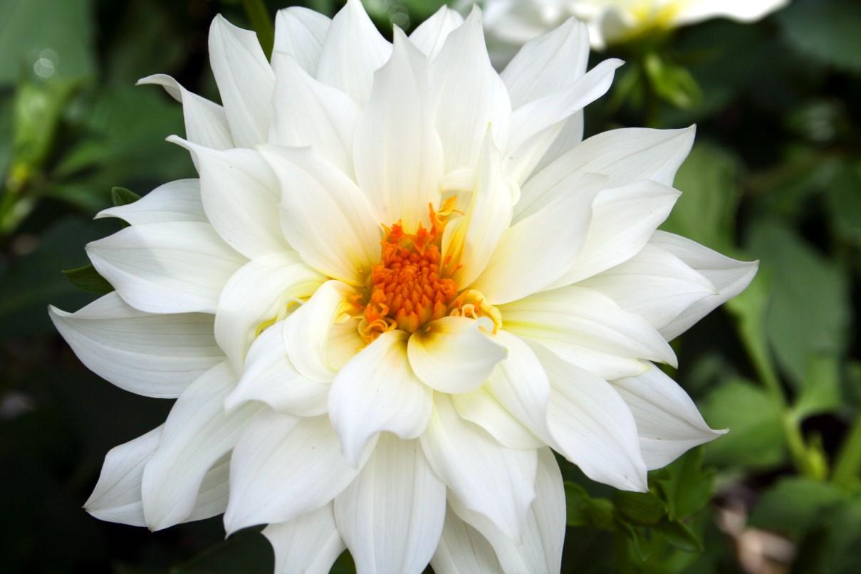 Flowers flowers flowers izmirmasajfo