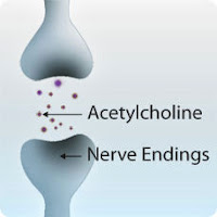 Acetylcholine at nerve endings.