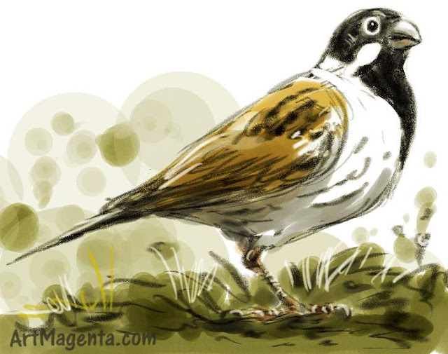 Reed Bunting sketch painting. Bird art drawing by illustrator Artmagenta.