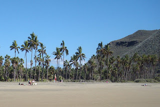 Travel Places to visit in Todos Santos
