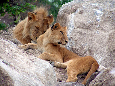 Africa's Most Dangerous Animal