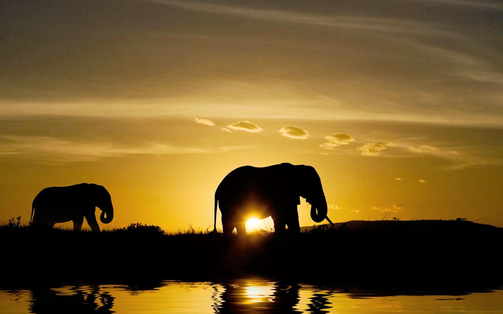 Elefantes, Pôr do Sol