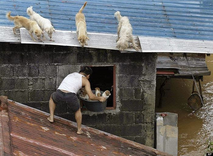 People doing amazing things for animals (28 pics), a chinese guy rescued a bucket of puppies to the roof from the flood
