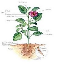 Mari Belajar Ipa Sd Bagian Bagian Tumbuhan Dan Fungsinya