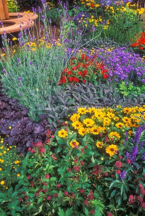 plantas bordaduras jardimUm jardim para cuidar Centaureas para um