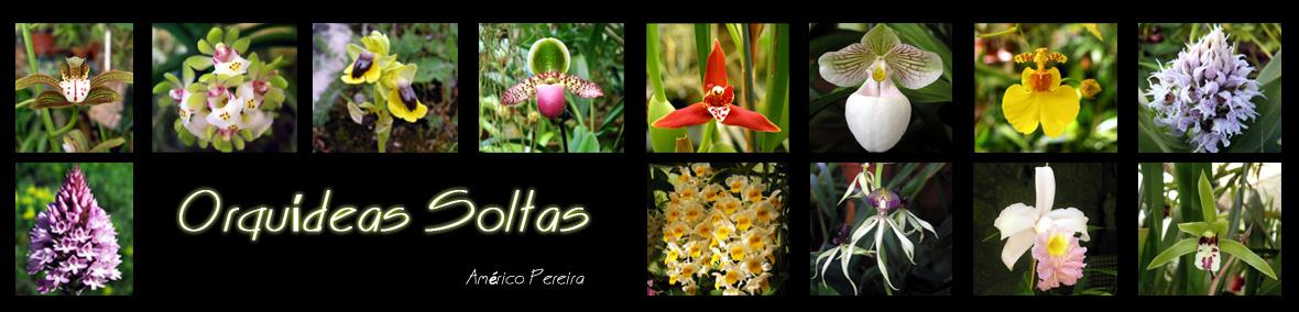 Orquídeas soltas