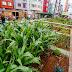 Agricultura en medio de la ciudad.