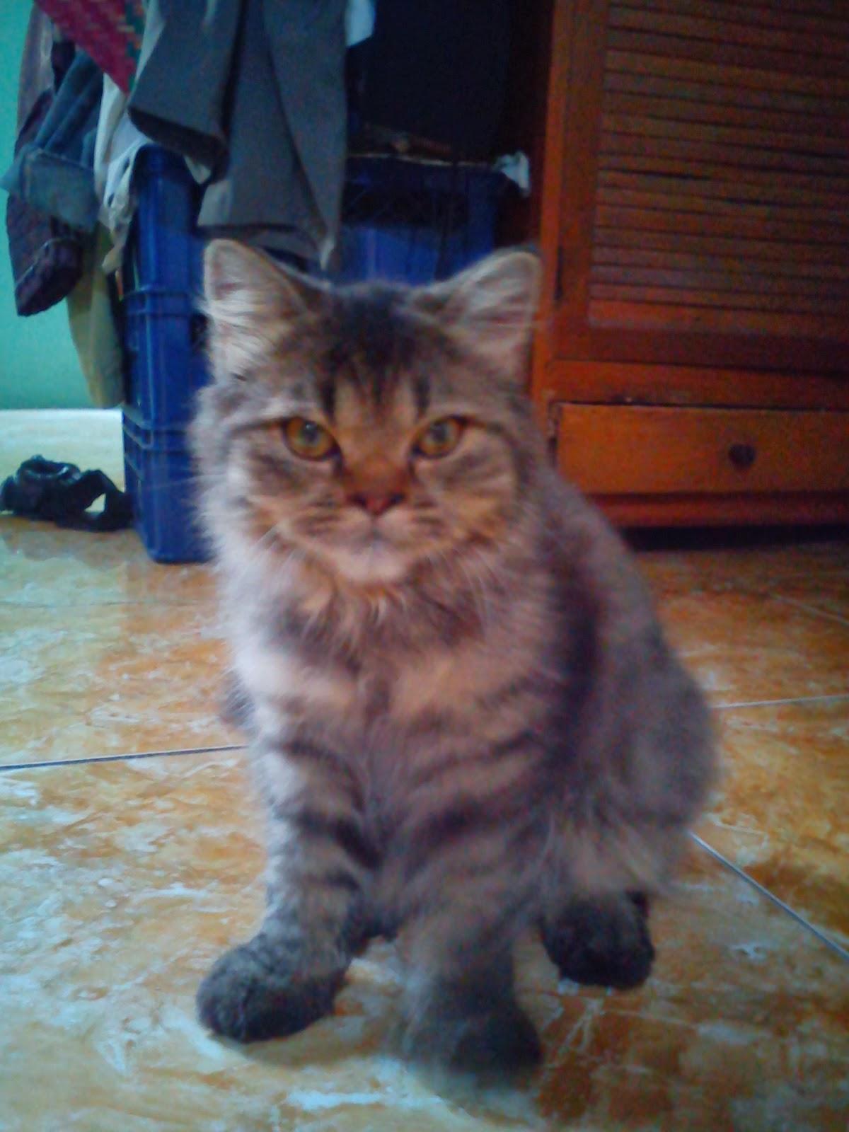 Kucingku Sayang Miupy Gallery