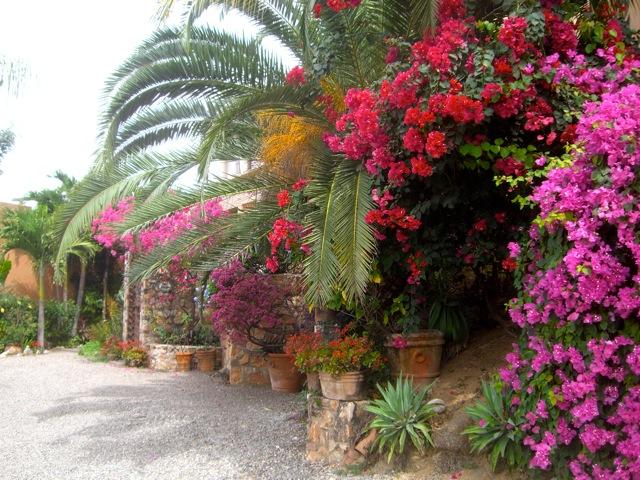 Arte y jardines de m xico for Jardines mexico